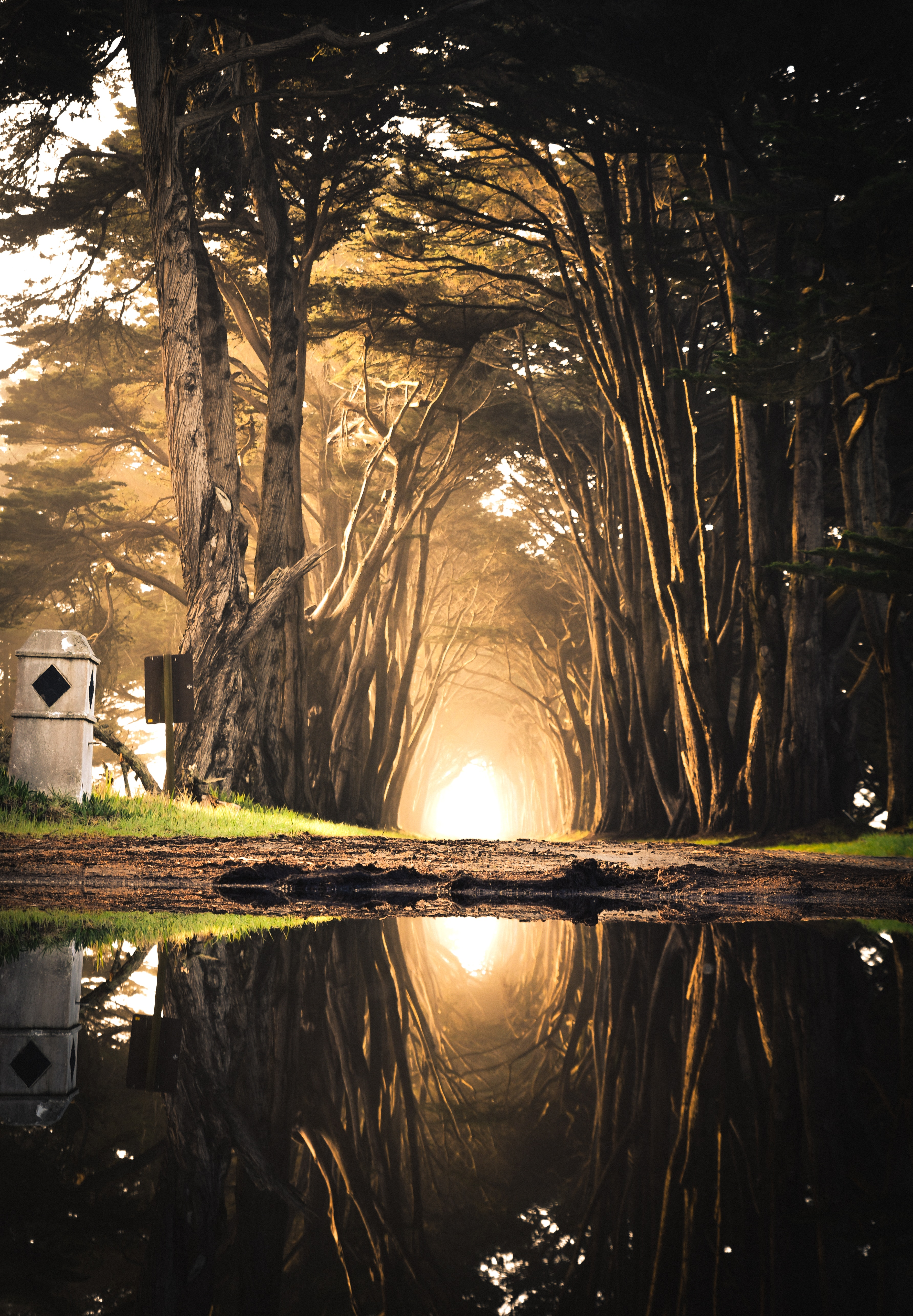 A tunnel of bright light is formed by a path between trees. It is a path that is travelled enough that we see the back of a road sign, and a gate to the left of the photo, but the sunshine reflects in a large puddle of water in the foreground.
