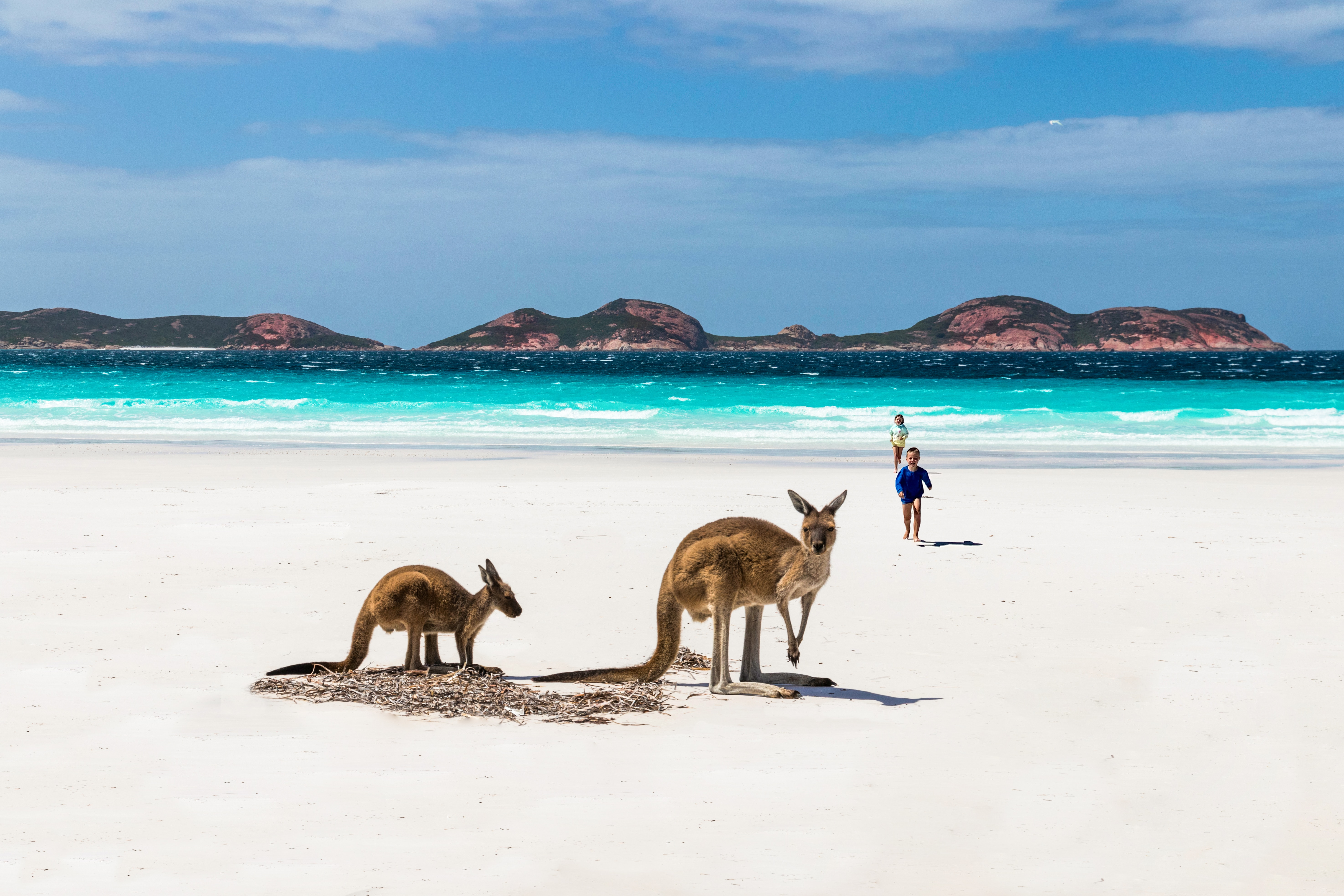Two kangaroos and two small children are on a white sand beach with turquoise water and mountains in the background.